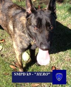 Hero - SMPD's Newest k9